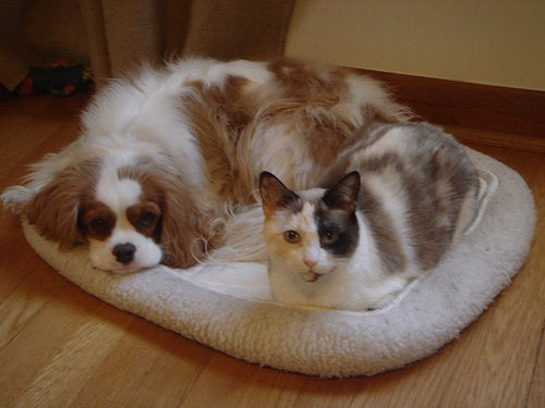 apartment living with cat and dog